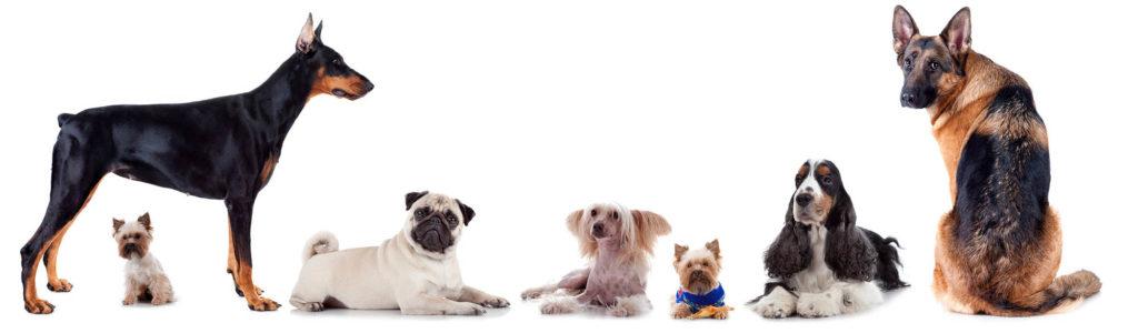 Webwinkel voor honden